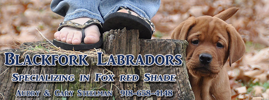 english fox red labradors california, northwest lab puppies for sale, fox red labrador, litters california breeders, fox red lab puppies california, labrador breeders california, english labradors oregon, labs, yellow labs, black labs, chocolate labs,  labrador retrievers california, washington, oregon, nevada, utah, arizona, montana, idaho, colorado, new mexico  labrador, retrievers,or, wa, ca, nv, az, mt, id, co, nm, breeder, champion pedigree labradors,pacific northwest, fox red labs washington, fox red labradors washington, labrador retrievers washington, labrador breeders washington, labrador breeders california, labrador retriever breeders california, northwest labrador breedersenglish fox red labradors california, northwest lab puppies for sale, fox red labrador, litters california breeders, fox red lab puppies california,